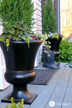 Plants for Summer Containers