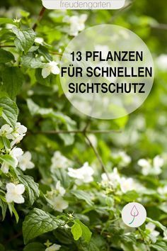 Fast growing plants- Schnell wachsende Pflanzen Idea for garden design: Plants that quickly provide green privacy protection in the garden. Herb Garden Design, Garden Types, Diy Garden Decor, Garden Beds, Garden Plants, Fast Growing Plants, Decoration Plante, Design Jardin, Pallets Garden