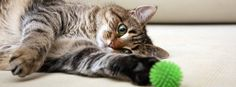 Online Shopping for Electronics, Apparel, Computers, Books, DVDs & Flea Prevention For Cats, Pet Monsters, Dog Shock Collar, Clumping Cat Litter, Puppy Pads, Dancehall Reggae, Pet Supply Stores, Hamster, Pet Odors