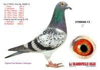 Pigeons • Herbots • Herbots
