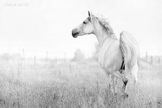 horse / running free