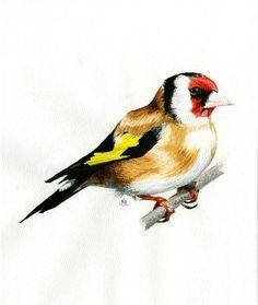goldfinch illustration - Buscar con Google