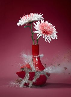 These high-speed photos capture delicate flower vases shattering in mid-air. Shot by Martin Klimas, the photographer experiments with all kinds of creative materials to produce inventive compositions using high-speed photography. Stop Motion Photography, High Speed Photography, Creative Photography, Amazing Photography, Art Photography, Shutter Photography, Flower Photography, Martin Klimas, Flower Vases