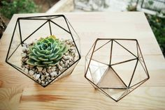 Small Geometric Glass Terrarium Handmade Glass Box Cactus