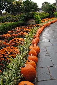 Are you wondering how to update your landscape for fall? Get inspired by these awesome ideas! A beautiful border of pumpkins, ornamental grasses, pretty cabbages and kale, and goldenrod are all great items to incorporate into your yard this autumn. Don't let the end of summer stop your yard from being stylish!