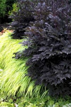 My Favorite Plant Combinations 72