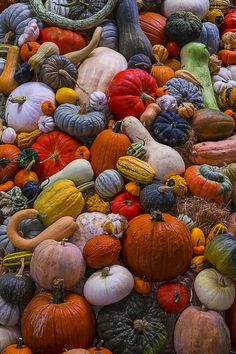Heirloom Harvest Art Print by Garry Gay. All prints are professionally printed, packaged, and shipped within 3 - 4 business days. Choose from multiple sizes and hundreds of frame and mat options. Pumpkin Varieties, Crochet Game, Pumpkin Art, Hello Autumn, Autumn Fall, Simple Wedding Invitations, Fine Art Photo, Jolie Photo, Fall Harvest