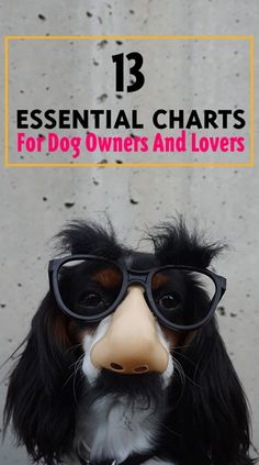 This post is dedicated to our lovely four-legged friends. We love them we want to take good care of them. But in order to do that we need to gain knowledge about them first so we collected some extremely useful charts that include essential information you should know to help you take good care of your dog.
