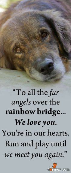 Remembering All Our Dearest Pets Who Have Crossed The Rainbow Bridge