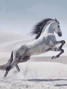 Beautiful! #HORSE##ANIMALS