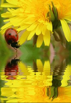 Animated Insects, Animated Graphics, Animated Landscape, Ladybugs, Beautiful Flowers, Keefers