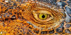 Macrojo, picture by Alvaro Cubero Vega (iguana's skin -texture) Fotografia Macro, Les Reptiles, Reptiles And Amphibians, Patterns In Nature, Textures Patterns, Beautiful Creatures, Animals Beautiful, Regard Animal, Animals And Pets