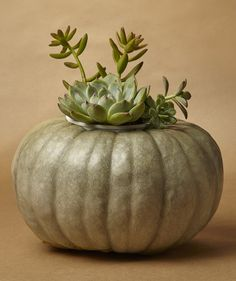 8 Easy Pumpkin Centerpieces to Complete Your Fall Table Pumpkin Planter, Diy Pumpkin, Green Pumpkin, Valentines Day Decorations, Valentines Diy, Thanksgiving Decorations, Autumn Decorations, Thanksgiving Tablescapes, Thanksgiving Feast