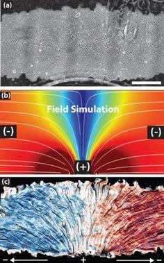 17 best tissue engineering images on pinterest tissue engineering