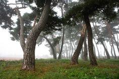 Midnight Sun, Pine Tree, Landscape Photographers, Grass, House Design, Nature, Plants, Cities, Landscapes
