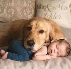 Cats and dogs have more differences are more introverted and intelligent because they want only affection unlike the inhuman who has brains who are proud and take pleasure in doing evil with your child or next