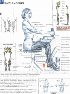 Seated Calf Raises  #exercise #workout #routine #fitness