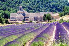 Senanque Abbey (France, founded in 1148)