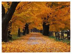 Fall on a country road in Ohio. Looks like the lane at my Grandma's farm.
