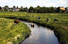 Schleswig Holstein: wenn eine Kuh in der Eider steht, bitte Familie Hansen anrufen... Stand jedenfalls neulich auf einem Schild in der Eider. B