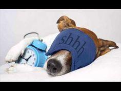 Música para dormir a tu perro Musica Relaja a tu mascota - YouTube