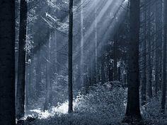 Der Waldprophet - Mühlhiasl