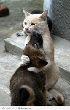 Hug it out..*