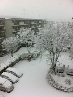 first snow, Tokyo
