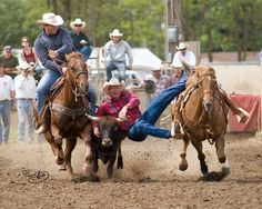 Dayton: Bulldog by sorrelstang on DeviantArt Rodeo Cowboys, Ride Rodeo, Animal Photography, Amazing Photography, Western Horse Riding, Country Trucks, Rodeo Time, Baby Cows, African Elephant