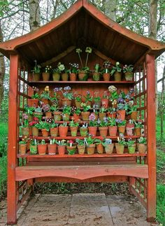 Amazing collection of Primulas, displayed in an English Garden. They take their Primula very seriously. Garden Plants, Shade Garden, Plant Theatre, Small Summer House, Sussex Gardens, Primula Auricula, Bethnal Green, Grand Homes, Longwood Gardens