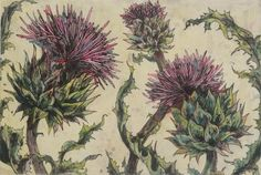 """Spear Thistle - Collagraph by Vicky Oldfield Botanical Illustration, Botanical Prints, Illustration Art, Scotland National Flower, Modern Oil Painting, Collagraph, Affordable Art Fair, Floral Illustrations, Flower Frame"