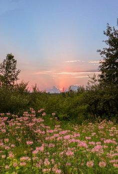 photo scenery Think spring! Wildflower Sunset at Stony Creek Metropark. Spring Aesthetic, Nature Aesthetic, Flower Aesthetic, Aesthetic Drawing, Aesthetic Vintage, Aesthetic Painting, Aesthetic Outfit, Aesthetic Dark, Aesthetic Clothes