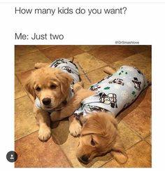 Bild könnte enthalten: Hund