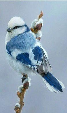 Cute Birds, Pretty Birds, Funny Birds, Exotic Birds, Colorful Birds, Colorful Animals, Tropical Birds, Unique Animals, Exotic Pets