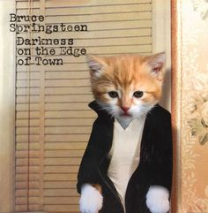 Legendary albums from a world dominated by kittens... All kitteny album parodies by Alfra Martini....