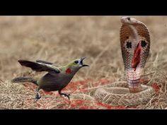 Most Amazing Wild Animal Attacks | Crocodile vs Wildebeest - Snake vs Bi...
