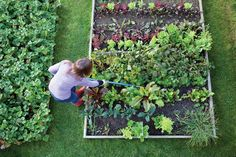 Diseña y crea tu propio jardín ecológico | Proyectos Decoradores