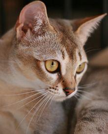 cats profile pics - Google Search