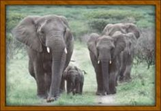 Thula Thula Private Game Reserve and Safari Lodge, Zululand, Sth. Africa.