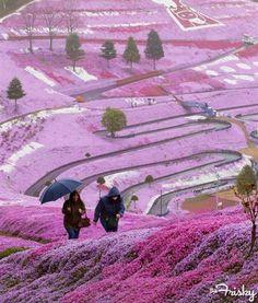 일본의 라벤더 시티