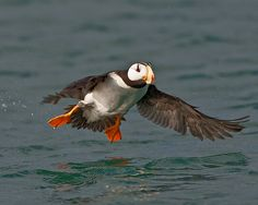 Homer, AK. Puffins are the best!
