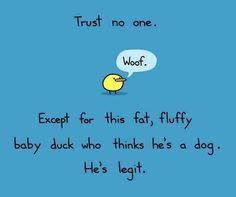 NO! NEVER TRUST A DUCK! EVER!