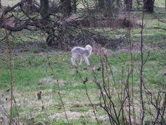 Tiere 2008 - Osterlamm