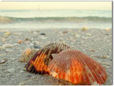 Clearwater Beach,Florida,US.  By Kurlylox1.