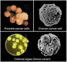 Astrobiology meets cancer research