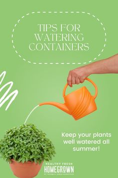 Watering plants growing in containers is a key task to take care of in summer. This guide to watering your container garden will cover watering tips for outdoor potted plants such as veggies, fruit, herbs and flowers. #healthyfreshhomegrown #homegrownisbest #wateringplants Planting Vegetables, Growing Vegetables, Vegetable Garden, Veggies, Outdoor Patio Umbrellas, Outdoor Plants, Potted Plants, Self Watering Containers, Watering Plants
