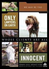 <3 Animal Legal Defense Fund <3 We may be the only lawyers on earth whose clients are all innocent <3