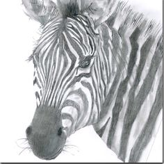 Zebra Greeting Card by British artist Sarah Boddy. Taken from an original pencil illustration and blank inside, this card is a striking choice for any occasion! Swinging Safari, Card Companies, Animal 2, Bird Drawings, Animal Cards, Safari Animals, Pencil Illustration, Watercolor Cards, Zebras