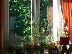 My first home veggie garden #gardening #garden #DIY #home #flowers #roses #nature #landscaping #horticulture