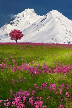 The Swiss Alps, Switzerland
